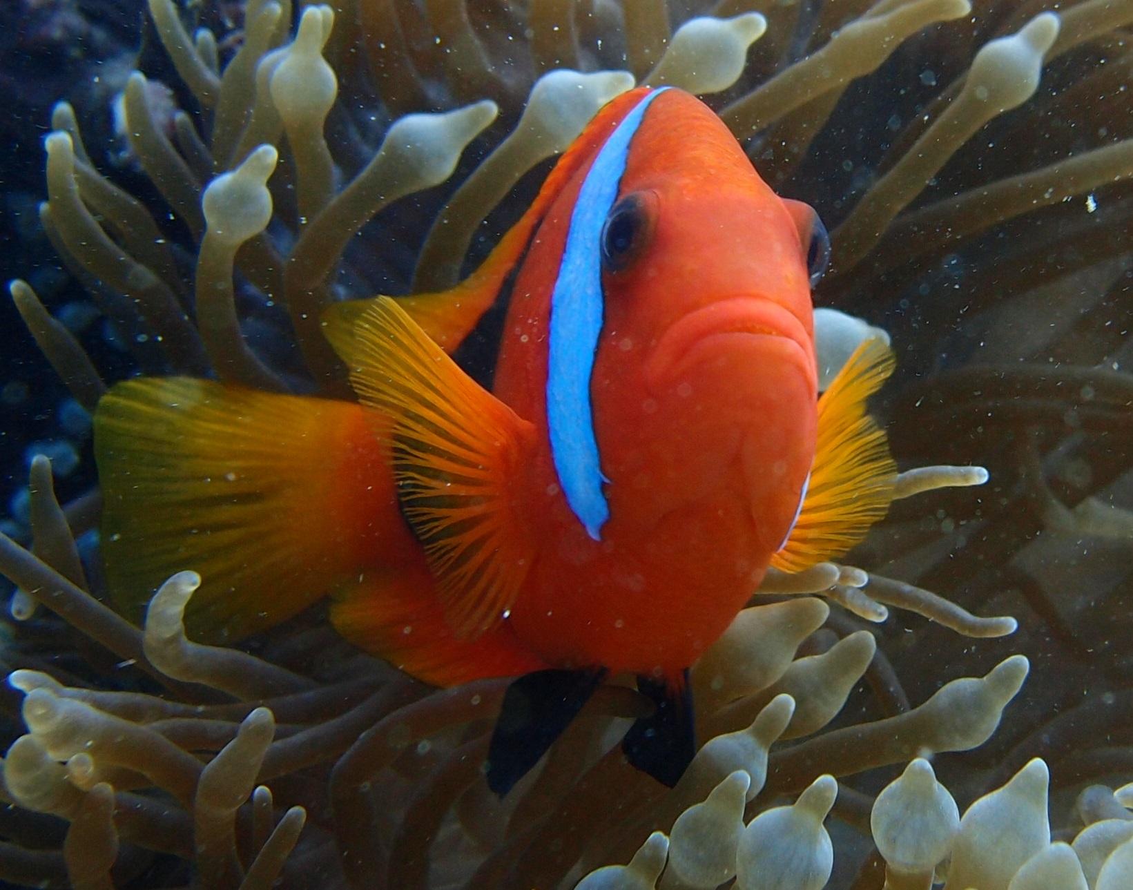 THE TOP 10 Queensland Scuba Diving (w/Prices) - Viator.com